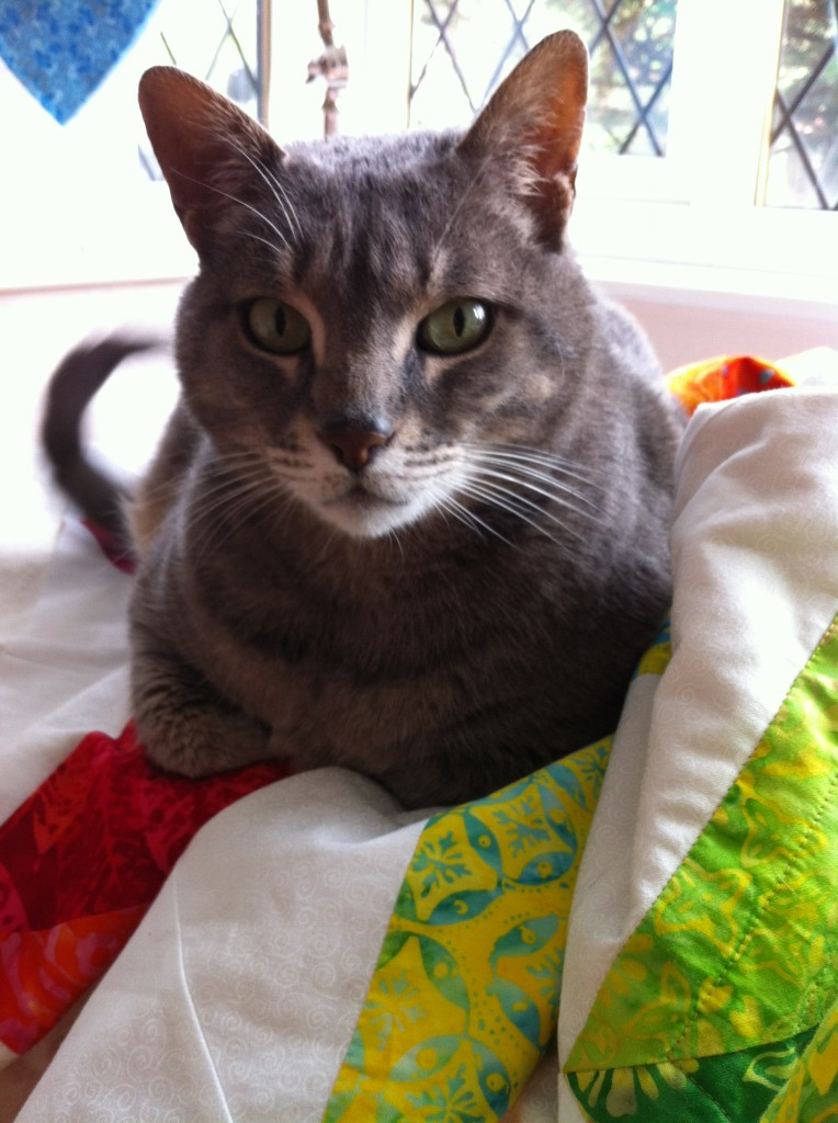 It's not really finished unless Schnitzel has supervised the quilting.